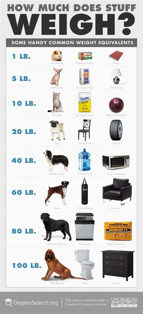 weigh much does weight loss stuff pound objects weighs comparison infographic visual pounds things object compare fat equivalent weights bag