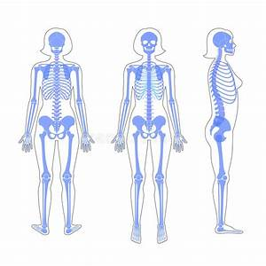 Woman And Man Skeleton Anatomy Stock Vector