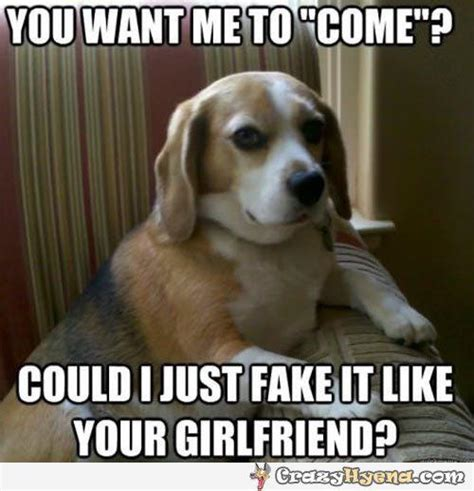 Dog Girlfriend Meme - 47 most funniest dog memes that will make you laugh
