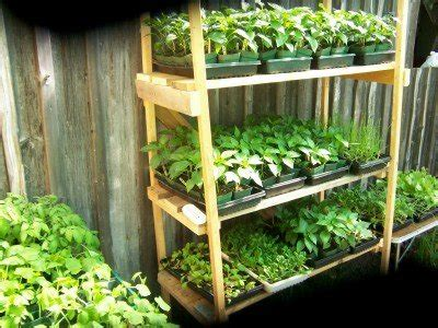 Backyard Business Ideas - start a backyard nursery business