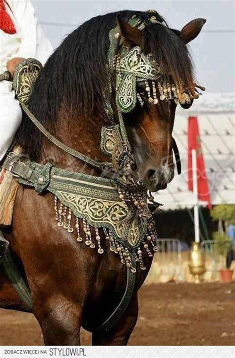 horse horses tack cool decorative gypsy pet accessories spanish pretty gear arabian headstall