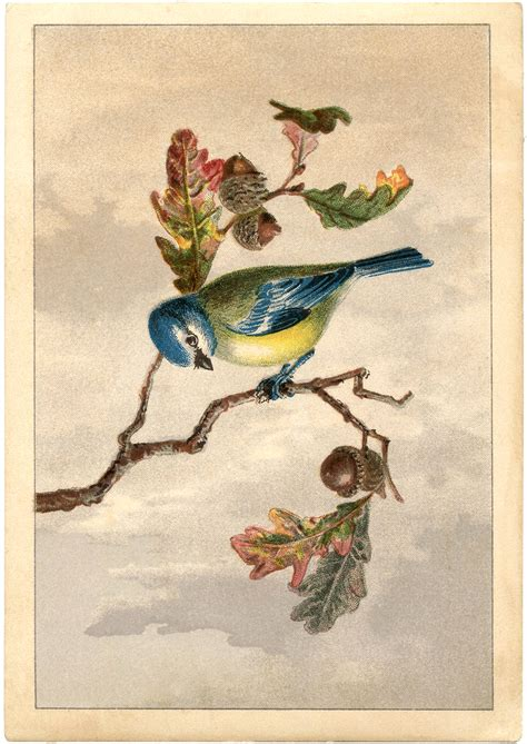 vintage bird clip art marvelous  graphics fairy