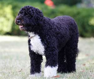 Barackanouews: Barack Obama Dog
