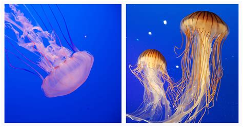 medusas - Ecosia