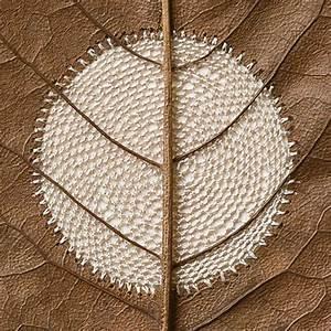 Fragile crocheted leaf sculptures by susanna bauer colossal for Fragile crocheted magnolia leaf sculptures by susanna bauer