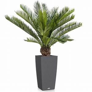 Grande Plante Artificielle : cycas artificiel avec tronc 2 hauteurs disponibles 90 cm et 100 cm ~ Teatrodelosmanantiales.com Idées de Décoration