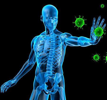 alimenti rafforzano il sistema immunitario rafforzare sistema immunitario evitando raffreddori