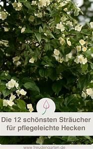 Sichtschutz Pflanzen Pflegeleicht : pflegeleichte hecke freudengarten blog garten hecken ~ A.2002-acura-tl-radio.info Haus und Dekorationen