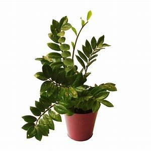 Plantes Grasses Intérieur : les plantes grasses d interieur ~ Melissatoandfro.com Idées de Décoration
