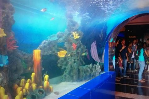 aquarium entry fee should you visit the renovated taraporevala aquarium the daily pao