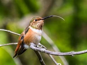 Ask the Naturalist: What Do Hummingbirds Taste?