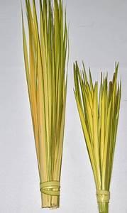 Palms for Palm Sunday
