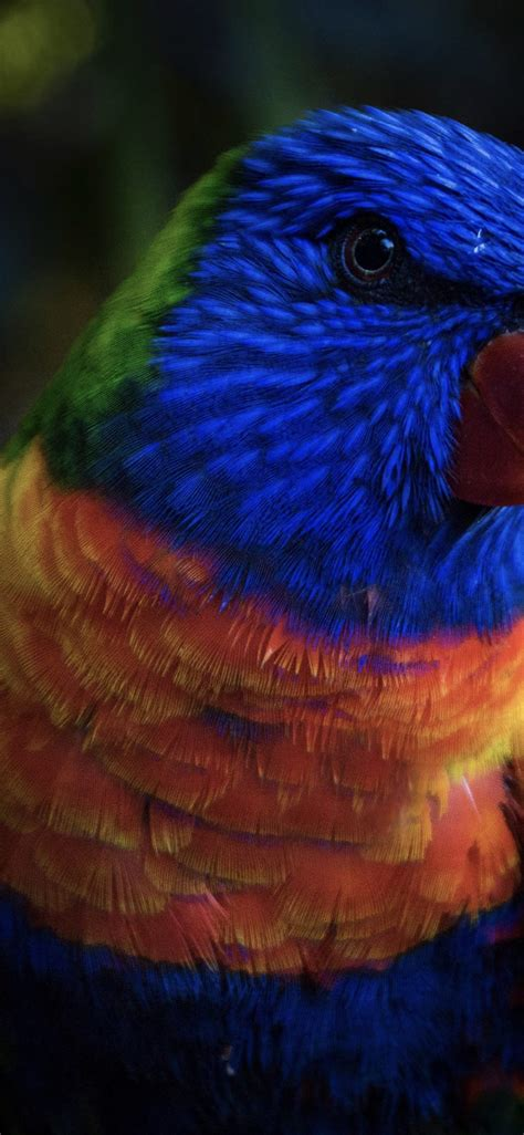 Download, share or upload your own one! Bird colorful blue animal | wallpaper.sc iPhoneXS