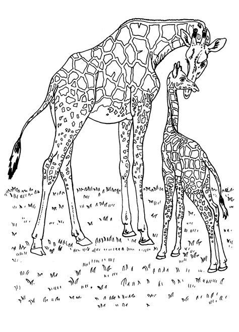 girafa planse de colorat  educative