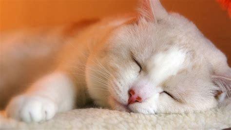 睡眠画像 に対する画像結果