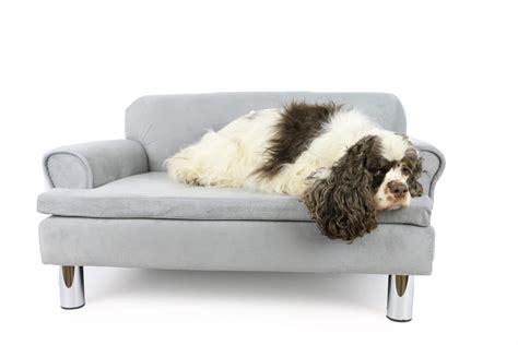 canapé pour chien canapé pour chien zolia liloe panier et corbeille