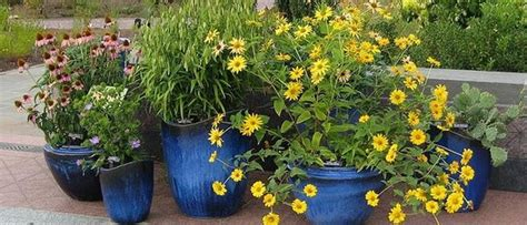 Limited Space? Try A Container Garden  Palmers Garden Centre