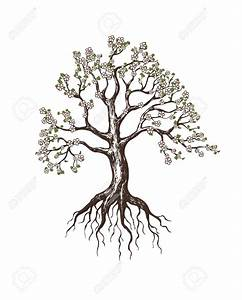 Tree And Roots Drawing Blooming Tree Royalty Free Cliparts ...