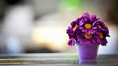 Flowers Wallpapers Flower Purple Pot Petals Desktop