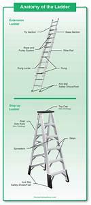 Lizard Anatomy Diagram