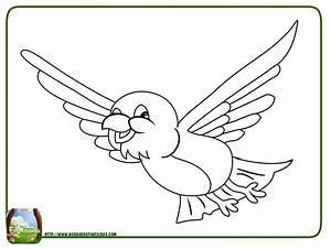 99 DIBUJOS DE PÁJAROS Y AVES ® Pájaros para colorear infantiles