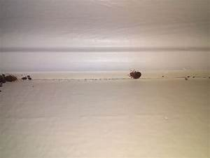 can bed bugs live in only one room thecreativescientistcom With can bed bugs only be in one room