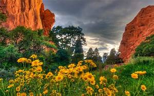 Spring Flowers In The Garden Of The Gods In Colorado ...