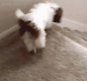 dog   stairs gif luvbat