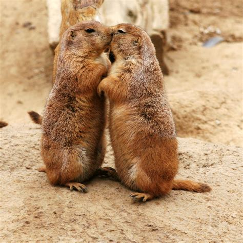 prairie dogs and now for something completely different animal groups part 5 beautiful also are the