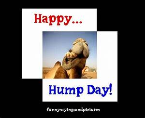 17 Best images about Hump Day on Pinterest   The office ...