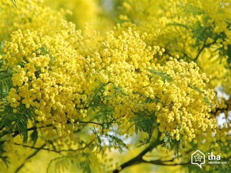 location bormes les mimosas dans une chambre d 39 hôte avec iha