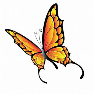 Flying butterfly Vector | Free Download