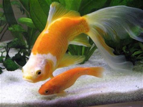 quel poisson choisir pour un petit aquarium quels poissons choisir pour un petit aquarium aquariums et vivariums forum animaux