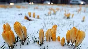 Blumen Im Winter : winter endet winterlich fr hjahr k nnte warm werden welt ~ Eleganceandgraceweddings.com Haus und Dekorationen