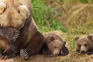 Won U2019t You Please Adopt A Grizzly Bear Cub