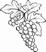 Grapes Grape Coloring Bunch Drawing Pages Vine Drawings Fruits Clipart Clip Printable Sketch Vegetables Fruit Wine Leaves Sheets Pencil Mpmschoolsupplies sketch template