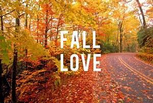 Fall Into Love Spell