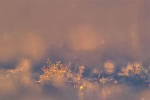 Bilder Vom Himmel : sterne die vom himmel fallen foto bild jahreszeiten winter natur bilder auf fotocommunity ~ Buech-reservation.com Haus und Dekorationen