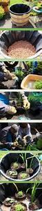 Plantes Vivaces Autour D Un Bassin : r alisation d 39 un bassin aquatique dans un demi tonneau de vin jardin jardin d 39 eau ~ Melissatoandfro.com Idées de Décoration