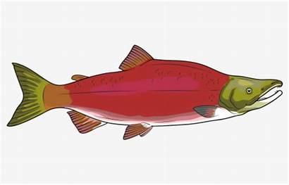 Salmon Clipart Native American Haida Totem Sockeye