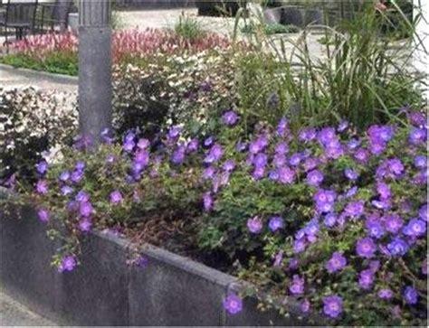 beste afbeeldingen  garden joy tuinverrassing op