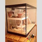Robo Dwarf Hamster Cages | 720 x 960 jpeg 97kB