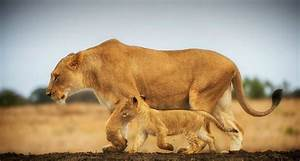 25 Mother and Baby Animals Love Picture - MagMent