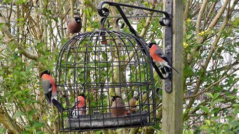bird cage anti squirrel  pigeon proof bird feeder