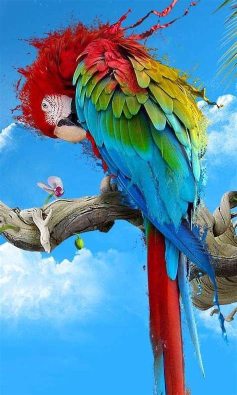 hd wallpaper  pc  mobile colour full parrot birds