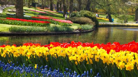 eleletsitz tulip garden images eleletsitz tulip garden wallpaper images
