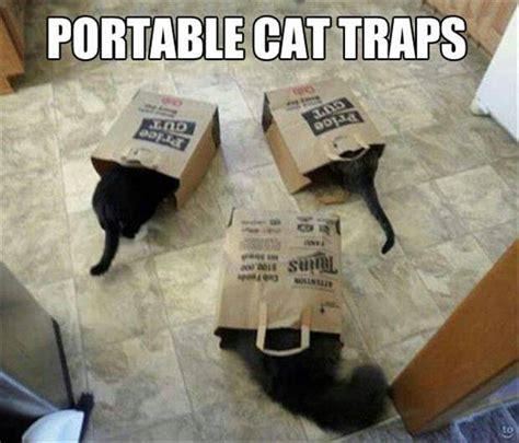 Cat Trap Meme - portable cat traps