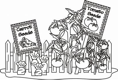 Coloring Vegetable Garden Pages Vegetables Printable Simple