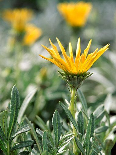 zone 10 plants list zone by zone to do list zone 10 for gardeners in