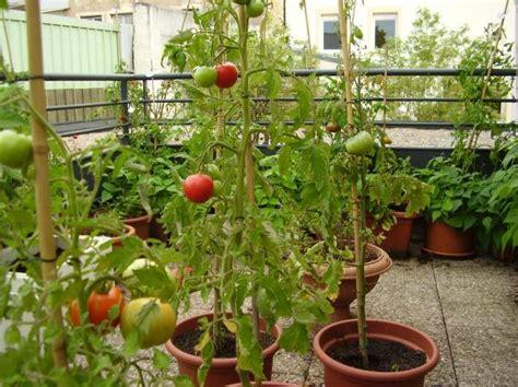 planter la tomate cerise en pot ou jardini 232 re arrosage